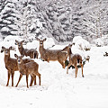 Deer In The Snow by Angel Cher