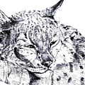 Deer Tiger by Nadi Sabirova
