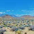 Desert Comfort by Marilyn Diaz
