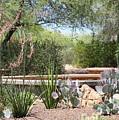 Desert Garden by Carol Groenen