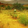 Desert Rose by Stephen Campbell