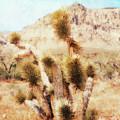 Desert Yucca by Paul Tokarski