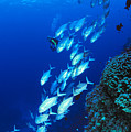 Diving Australia by Dave Fleetham - Printscapes