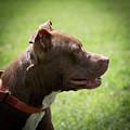 Dog At Satchel's Last Resort by Richard Goldman