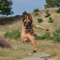 Dog Leaping by FL collection