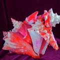 Dog Shell by Arlin Jules