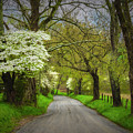 Dogwood Trail, Smoky Mountain, Tennessee by Stanton Tubb