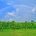 Double Rainbow Vineyard, Smith Mountain Lake by The American Shutterbug Society