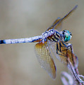 Dragonfly by Paul Gibson