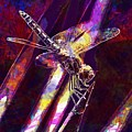 Dragonfly Insect Close  by PixBreak Art