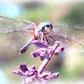 Dragonfly by Janet Pugh