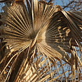 Dried Palm Fronds by Katherine Nutt