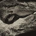 Driftwood by Hugh Smith