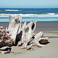 Driftwood On Beach by Perl Photography