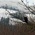 Eagle Watching by Jan Noblitt