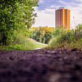 East Bank Trail by Vincent Buckley