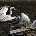 Egret 43 by Kristopher Bedgood