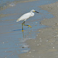 Egret Walking Up The Beach by DejaVu Designs