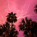 Electrified Palms by Stephen Whalen