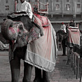 Elephant At Amber Fort by Sonal Dave
