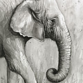 Elephant Watercolor by Olga Shvartsur