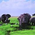 Elephants  by Miriam Marrero