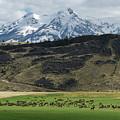 Elk Herd by Christian Heeb