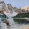 Elk In Moraine Lake by Paul Larson