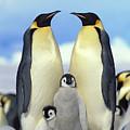 Emperor Penguin Aptenodytes Forsteri by Konrad Wothe