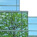 Environment Reflected by Ann Horn