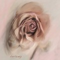 Ethereal Rose by Susan  Lipschutz