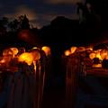 Evening Lights by Lynda Dawson-Youngclaus
