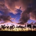 Everglades Sunset by Jonathan Gewirtz