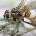 Eye Of The Fly by Raelene Goddard