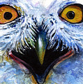 Eyes Of Owls No. 15 by John D Benson