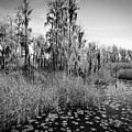 Faces Of The Swamp, No. 7 by Elie Wolf