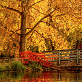 Fall Colors By The Pond by Teri Virbickis