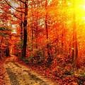 Fall by Dorothy Binder