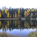 Potty Pond Reflection - Fall Colors Divide Co by Margarethe Binkley