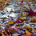 Fall by Jason Leonti