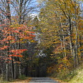 Fall Lane by Penny Neimiller