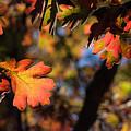 Fall Leaves by Naga Bhargav Garaga