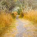 Fall Pathway 3 by Wendy Elliott