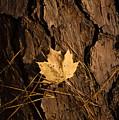 Fallen Leaf by Gary Adkins