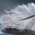 Feather by Magdalena Bujak