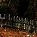 Fence Line by Toby Horton