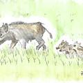 Feral Hogs by Ronnie Maum