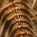 Fern Abstract by Ron Dahlquist - Printscapes