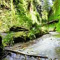 Fern Canyon, Redwood National Park by Vu Nguyen