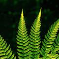Fern Close-up Nature Patterns by Jim Corwin